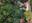 Screen Shot 2020-07-02 at 12.39.57 AM.png